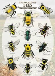 The World Of Bees Poster
