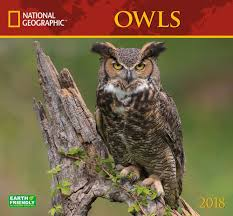 2018 National Geographic Owls Wall Calendar - National Geographic ... National Geographic Backyard Guide To The Birds Of North America Field Manakins Photo Gallery Pictures More From Insects And Spiders Twoinone Bird Feeder Store Birds Society Michigan Mel Baughman Blue Jay Picture Desktop Wallpaper Free Wallpapers Pocket The Backyard Naturalist 2017 Cave Wall Calendar