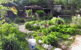Permaculture – The Sustainable Farm Of The Future? | Permaculture ... Thriving Backyard Food Forest 5th Year Suburban Permaculture Bill Mollison Father Of Gaenerd 101 Pri Cold Climate Archives Chickweed Patch Garden Design With Permaculture Kitchen Herb Spiral Backyard Orchard For The Yards Pinterest Orchards Australian House Garden January 2017 Archology Download Design And Ideas Gurdjieffouspenskycom Sustainable Farm Future Best 25 Ideas On Vegetable Youtube