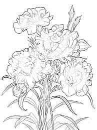 Carnation Flower Coloring Pages 8