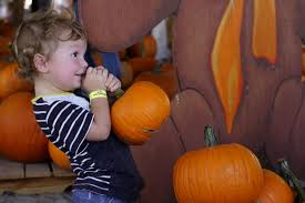 Pumpkin Patch Tampa 2014 by Halloween Things To Do With Kids And Families In Tampa Bay