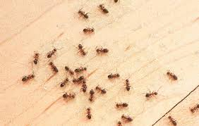 5 Natural Ways To Repel The Ants Marching Across Your Kitchen