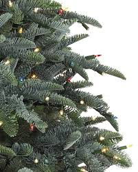 Best Live Christmas Trees For Allergies by Noble Fir Christmas Trees Balsam Hill