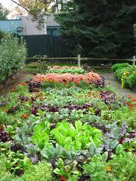 how florida winter gardening to grow a ve able garden in home