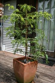 Potted Christmas Tree by Art Archives Permaculture Visions