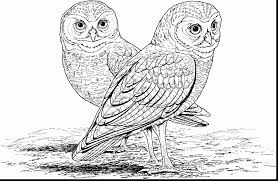 Unbelievable Hard Owl Coloring Pages Printable With For Adults And Mandala