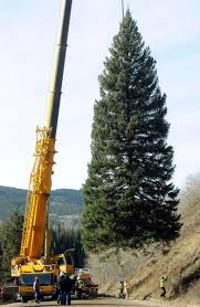 Christmas Tree Permits Colorado Springs by Capitol Christmas Tree Comes From Colorado This Year U2013 The Denver Post