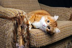 cat sofa how to keep scratch happy cats furniture mnn nature