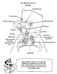 Pdf Doctor Anatomy Coloring Book Page Saunders Veterinary Second Edition Animal Colouring