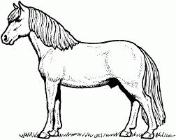 Download Coloring Pages Horses Free Horse Drawing