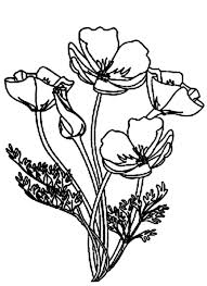 600x826 Picture Of Blooming California Poppy Coloring Page Artsy Fartsy
