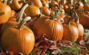 Skinny Bones Pumpkin Patch Food by Omaha Area Pumpkin Patches And Haunted Houses Experience Our City