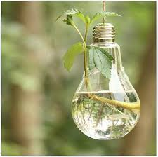 light bulb glass hanging vase airplants bulb terrarium set