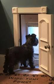 Best Pet Doors For Patio Doors by Terrific Diy Pet Door 76 For Your Trends Design Ideas With Diy Pet