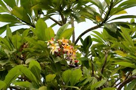 Free nature blossom fruit leaf flower bloom spring