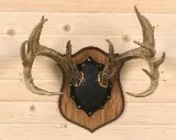When Do Deer Shed Their Antlers Ontario by How Do You Guys Like To Mount Your Deer Antlers I U0027ve Got Several