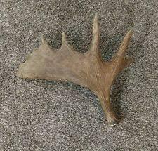 moose sheds large animals ebay