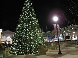 Christmas Tree Shop Allentown Pa by Six Dog Friendly Holiday Traditions To Start Fidose Of Reality