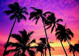 Tumblr Beautiful California Florida Nature Palm Trees Photography Sun Sunset