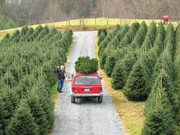 Cartner Christmas Tree Farm by Collection Boone Christmas Tree Farms Pictures Halloween Ideas