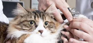 haired cats 5 tips for grooming haired cats catster