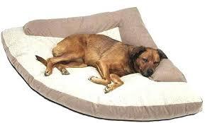 dog beds at walmart restate co