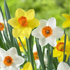 33 best gardening with bulbs images on bulbs bulb and