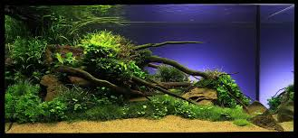 Special Design Aquarium Aquascaping