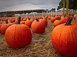 Free Pumpkin Patch Charleston Sc by Boone Hall Pumpkin Patch Reopens After Hurricane Matthew Wcbd News 2