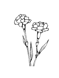 Carnation Coloring Page Flower Pages And Print