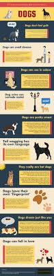 Best 25 Fun facts about dogs ideas on Pinterest