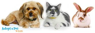 adopt a cat how does it work to adopt a pet adoptapet