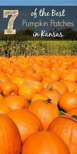 North Lawrence Pumpkin Patch by 7 Of The Best Pumpkin Patches In Kansas Traveling Mom
