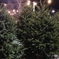 Fraser Fir Christmas Trees Delivered by Fraser Fir Kw Homestead