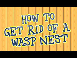 how get rid of wasp nests home remedy