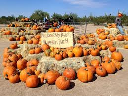 Pumpkin Patch With Petting Zoo by Macdonald U0027s Ranch Pumpkin Festival 2017 North Phoenix Family
