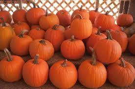 Pumpkin Patch Bakersfield by How To Celebrate Halloween Weekend In San Francisco