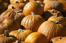 Pumpkin Patch Marble Falls by Halloween In Austin Where To Find Pumpkin Patches Haunted Houses