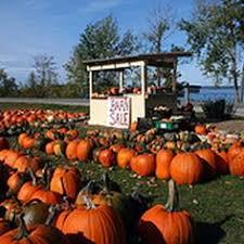 Pumpkin Patches Cincinnati Ohio Area by Pumpkin Farm Field Trip Pumpkin Growing Pumpkin Farm And Farming