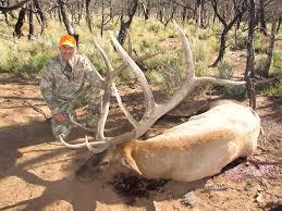 Elk Shed Hunting Utah by Book Cliffs Hunting