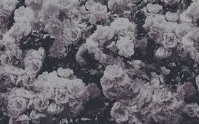 Beautiful Background I Created Photo Of Flowers Shot By Me And Editd On BeFunky Edit Photos Website Myself