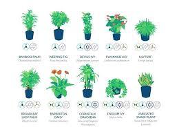 le bureau verte plantes pour bureau chargac par visiteur le 18 02 2016 clusea