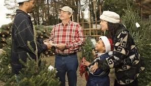 How To Open A Christmas Tree Lot