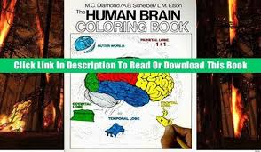 EBook Read The Human Brain Coloring Book Concepts Series Popular Download Mobi Online