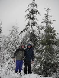 Leyland Cypress Christmas Tree Farm by Choosing A Christmas Tree Habitat Horticulture Pnw