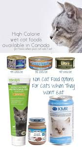 cat wont eat high calorie alternatives to a d for feeding your