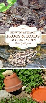 How To Attract Frogs And Toads To Your Garden | Need For, Insects ... Ohios 15 Species Of Frogs And Toads At A Glance Trekohio 13 Illinois Toads Frogs Midwestern Plants A Container Pond To Host Fish I Want Make One With How Raise Pictures Wikihow Utah Division Wildlife Rources Focus On Long Legged Cute Sitting Couple Cartoon Style Garden The Frog Pond Coach Michele Motorbike Frog Wikipedia Shop 145in Statue Lowescom