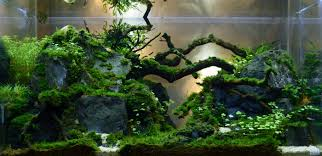 Lo-Tec PRL Tank | AquaScaping World Forum Hamsa Wabikusa Style Aquascaping World Forum Httpwww Nature Aquarium And Aquascaping Wiki 25l Nano Capa 2011 French Aquascapers Results My Scape Iaplc Rank 70 The Passing Of Legend Takashi Amano Magazine With Nicolas Guillermin Surreal Submarine Amuse Aquascape The Month August 2010 Beyond Riccardia Chamedryfolia Question This Is Ada 2009 Susanna Aquascape Garden Bonsai Plants