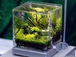 aquarium d eau douce le pico aquarium eau douce planté