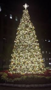 Baltimore County Christmas Tree Disposal by 115 Best Lights Lights And More Lights Images On Pinterest